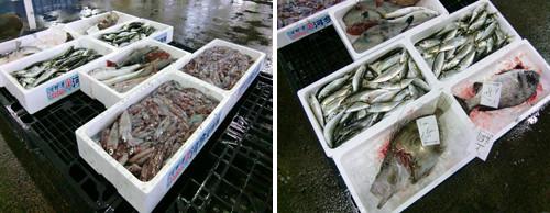 入荷された魚