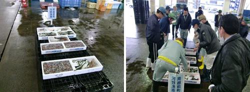 入荷された魚とセリの様子